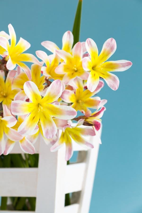 五颜六色的春天花花束,在白色木容器 免版税图库摄影
