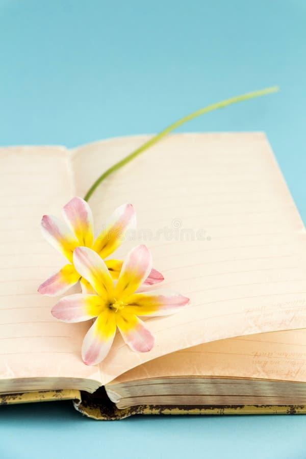 五颜六色的春天花,与文本的空白开放日志 免版税库存照片