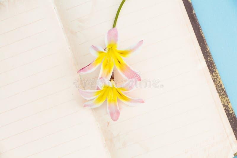 五颜六色的春天花,与空白开放日志页 库存照片