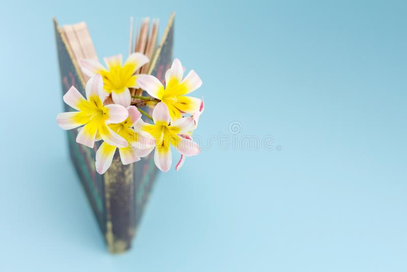 五颜六色的春天花,在页站立之间和有一点被打开的书/日志 库存照片