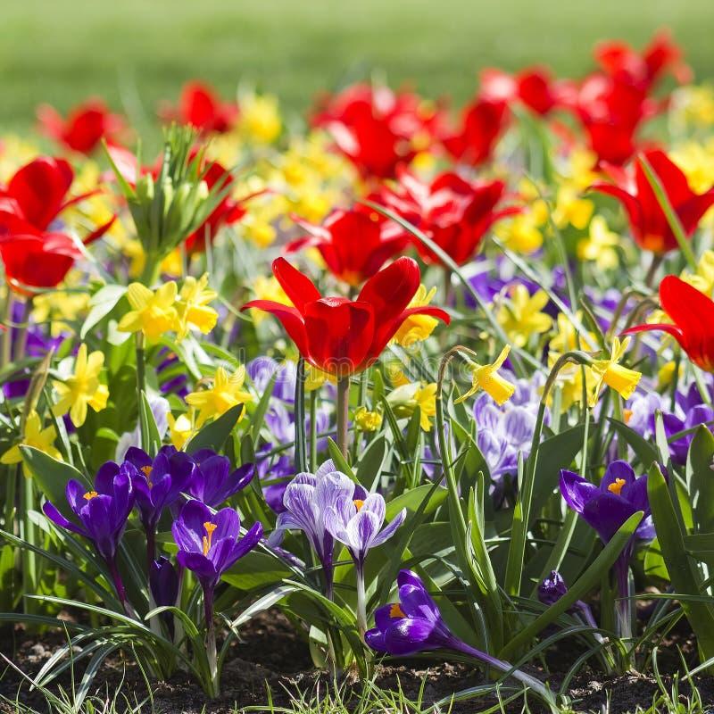 五颜六色的春天花 库存照片