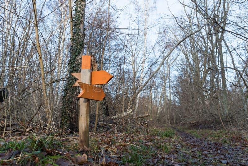 五颜六色的木箭头在森林里 免版税库存图片