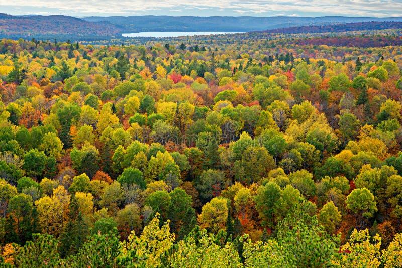 五颜六色的树上面在秋天森林里 免版税库存照片