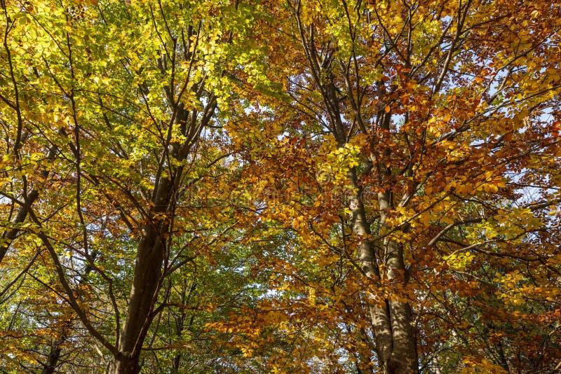 五颜六色的树冠在森林在秋天 免版税库存照片