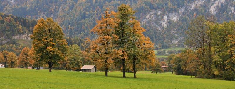 五颜六色的树和绿色草甸 免版税库存图片