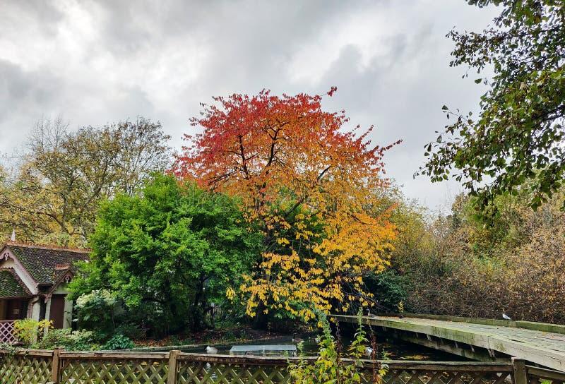 五颜六色的树的独特的组合 库存图片