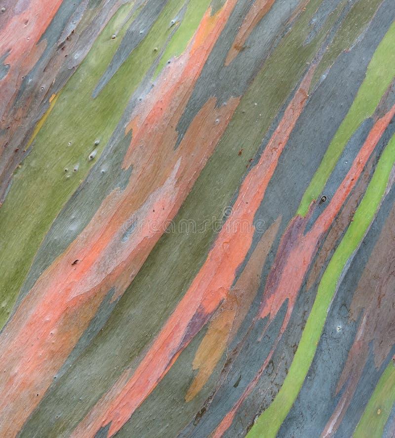 五颜六色的树皮背景 免版税库存图片