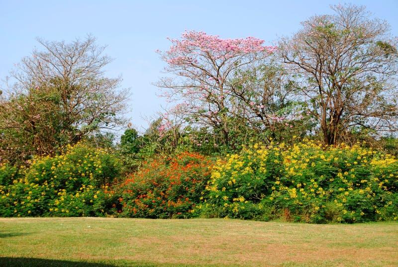 五颜六色的树 免版税图库摄影