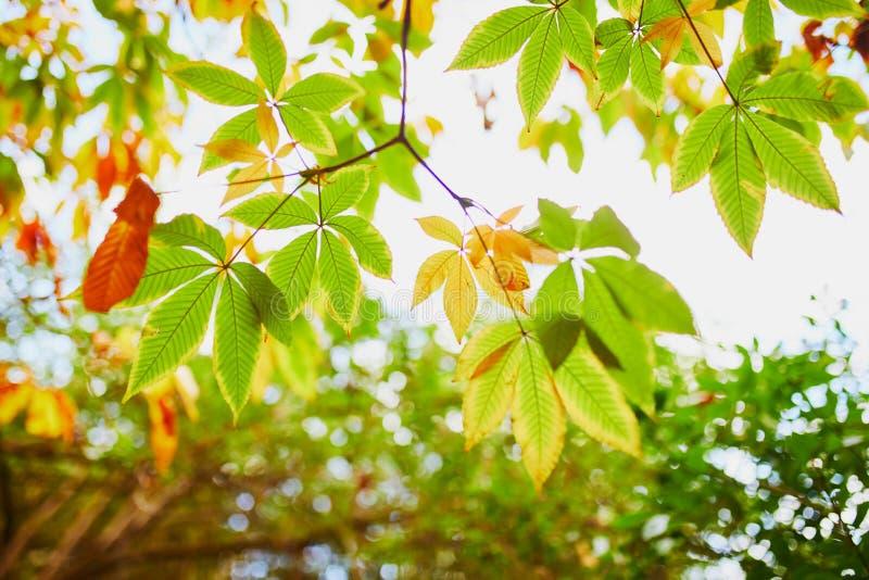 五颜六色的栗子在一美好的秋天天离开 图库摄影