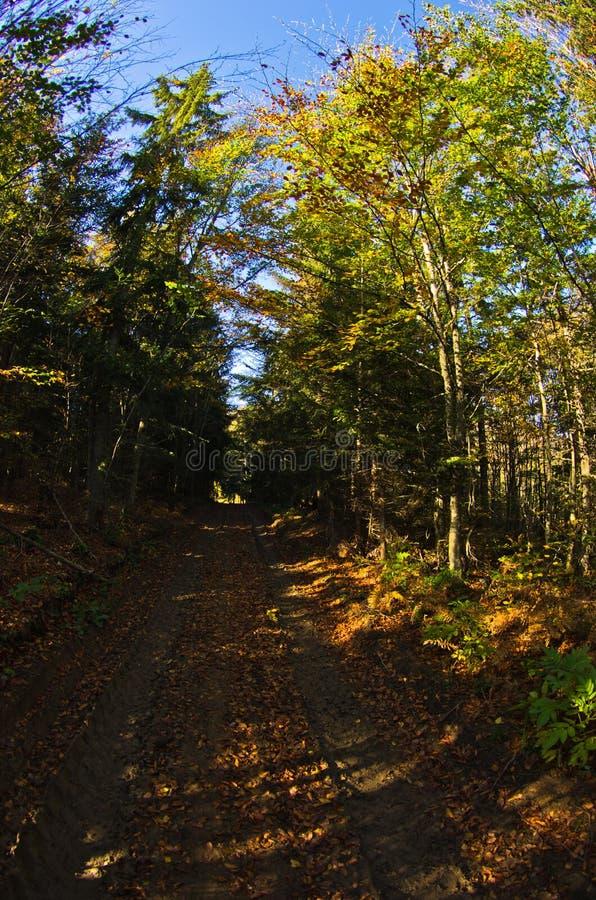 五颜六色的森林道路在秋天早晨, Cemerno山 免版税库存图片