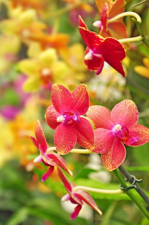 五颜六色的植物群开花兰花 免版税图库摄影