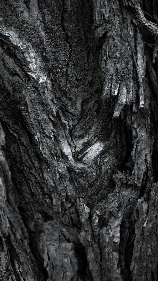 五颜六色的概略的树纹理特写镜头宏指令 图库摄影