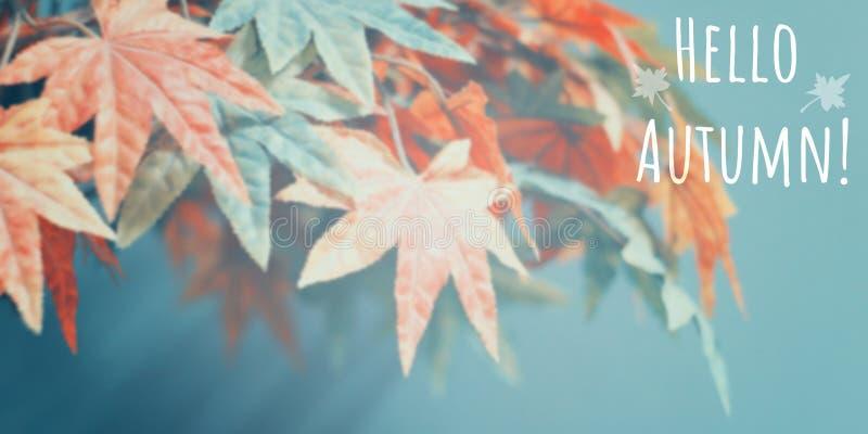 五颜六色的槭树抽象迷离背景  免版税库存图片