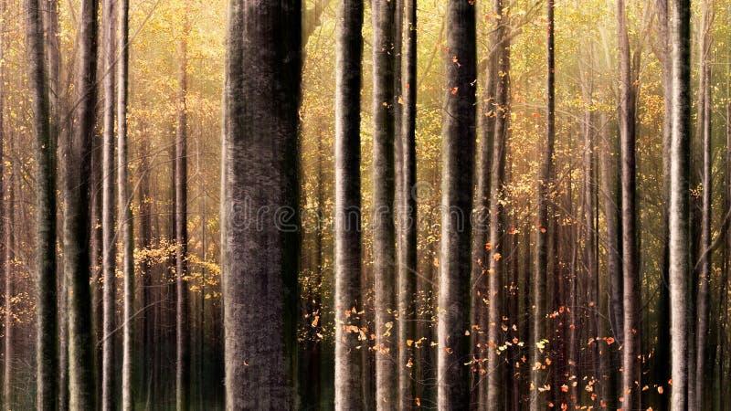 五颜六色的欧洲森林 免版税库存照片