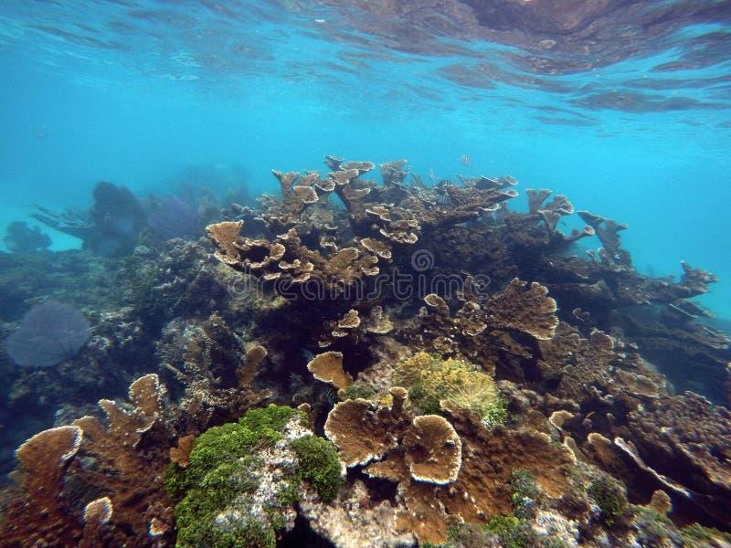 五颜六色的水下的珊瑚礁墨西哥 免版税库存图片