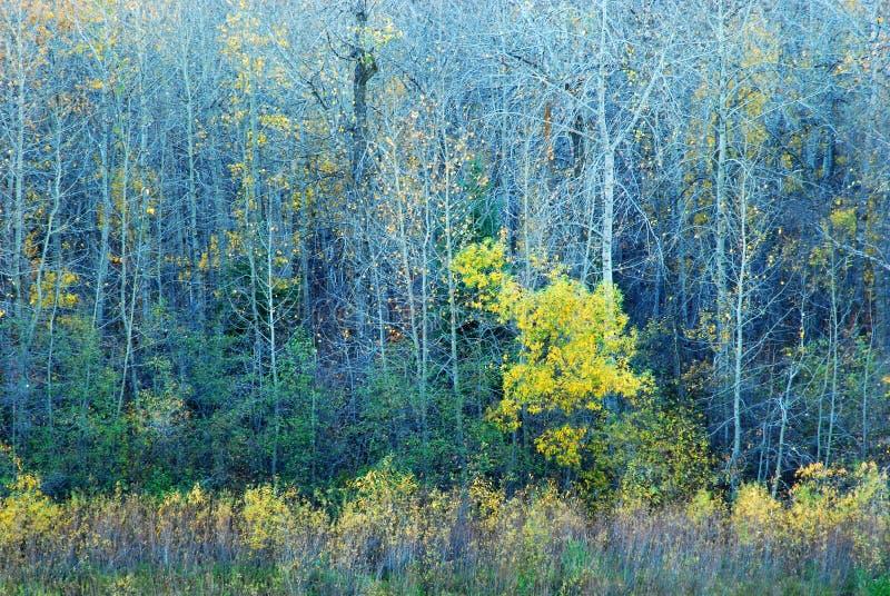 五颜六色的河结构树谷 免版税库存图片