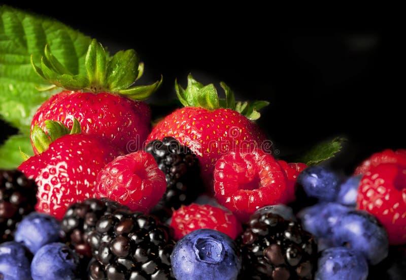 五颜六色的浆果 库存图片