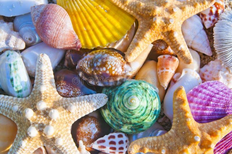 五颜六色的海壳和海星 免版税图库摄影