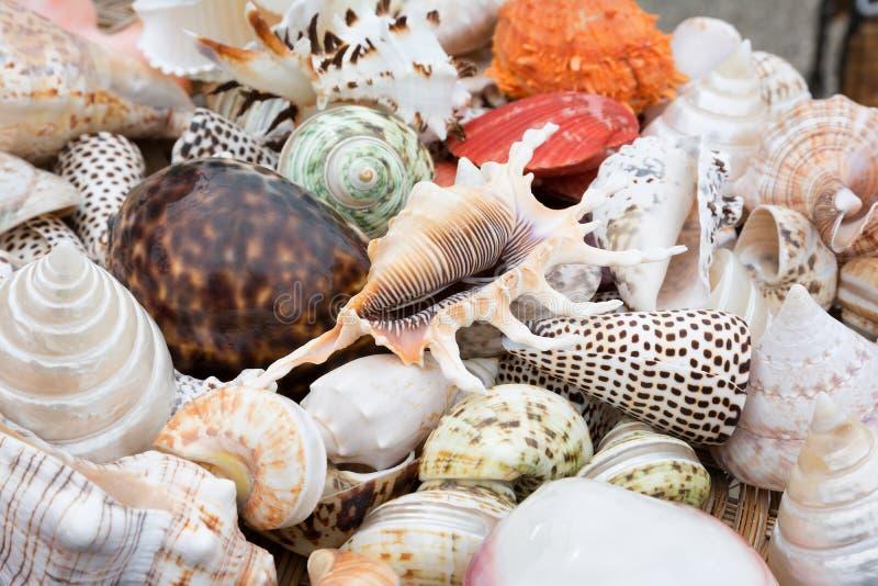 五颜六色的海壳特写镜头作为背景的 库存照片