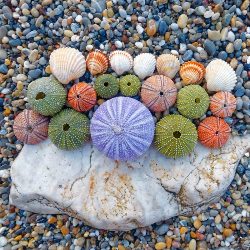 五颜六色的海顽童和壳在海滩 免版税库存图片