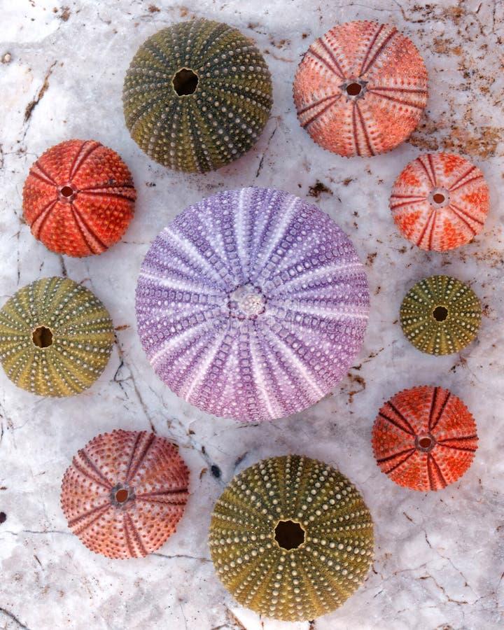 五颜六色的海顽童的汇集在白色大理石的 库存照片