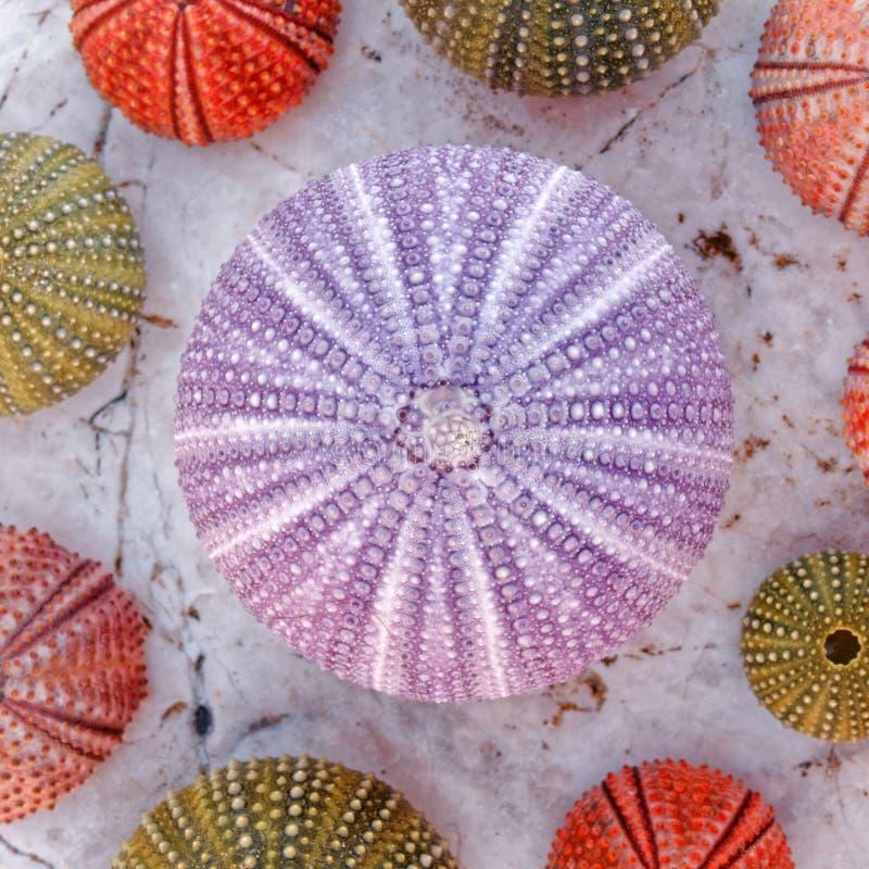 五颜六色的海顽童的汇集在白色大理石的 免版税库存图片