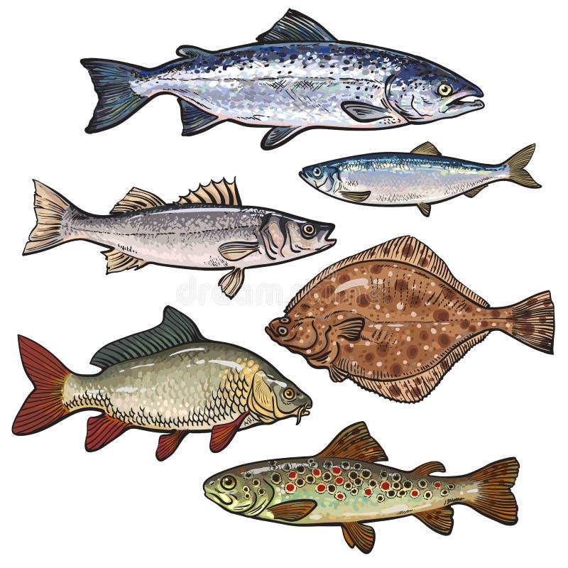 五颜六色的海鱼在白色背景速写被隔绝的样式收藏 向量例证
