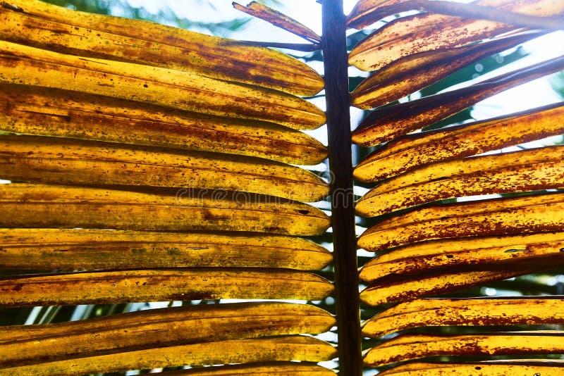 五颜六色的热带棕榈叶 特写镜头 夏天光 图库摄影