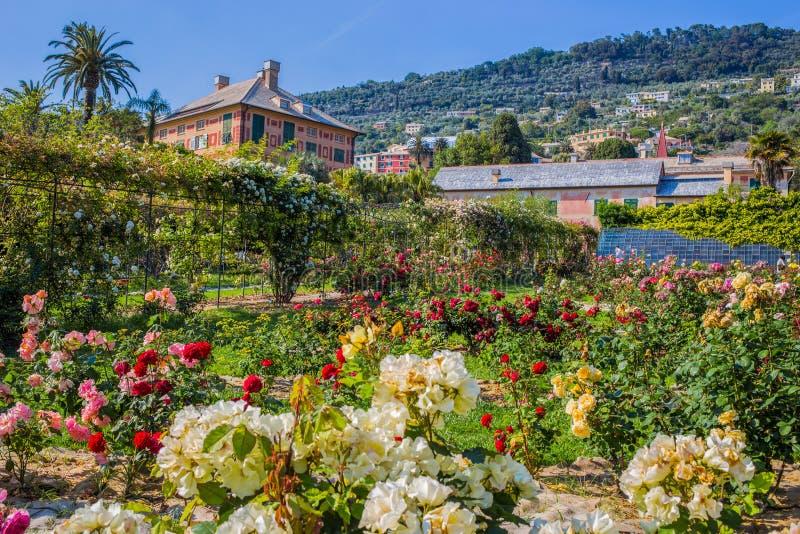 五颜六色的玫瑰园` Il Roseto `在热那亚赫诺瓦Nervi,里面热那亚Nervi Groppallo公园,意大利 免版税图库摄影