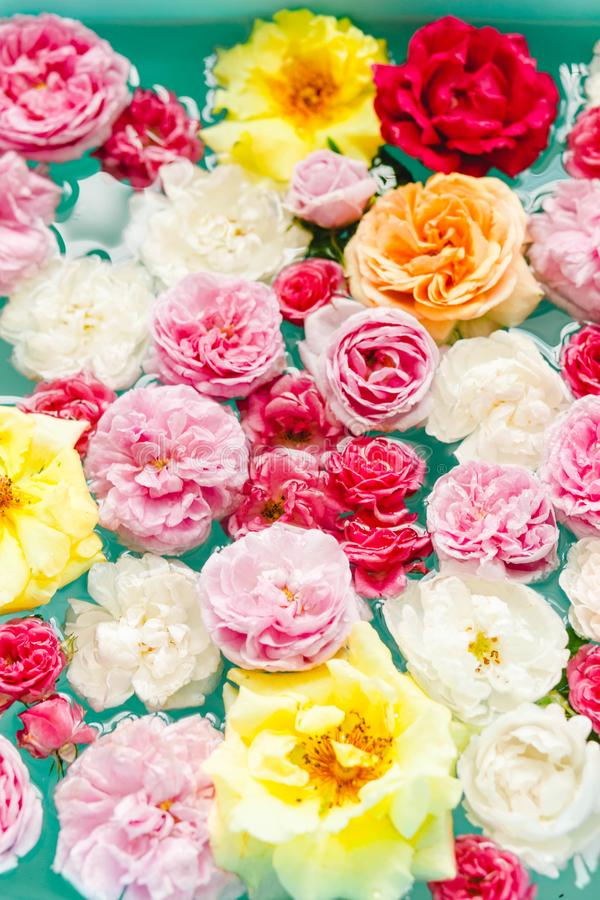 五颜六色的玫瑰惊人花卉纹理在水中在蓝色背景 库存照片