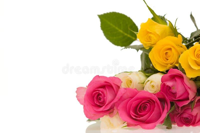 五颜六色的玫瑰 库存图片