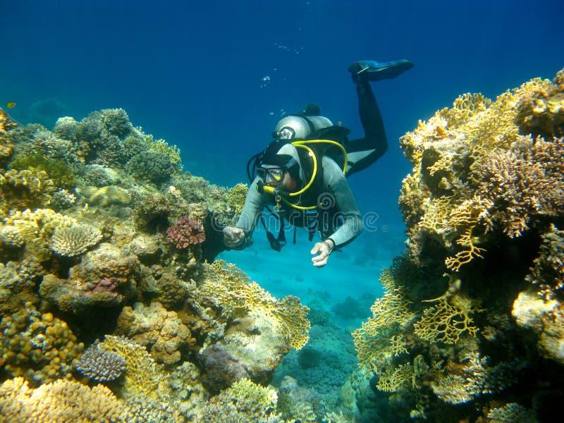 五颜六色的珊瑚礁和潜水者在热带海,水下 免版税库存照片