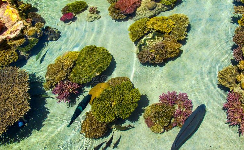 五颜六色的珊瑚礁和美好的水下的生活 埃拉特以色列 库存图片