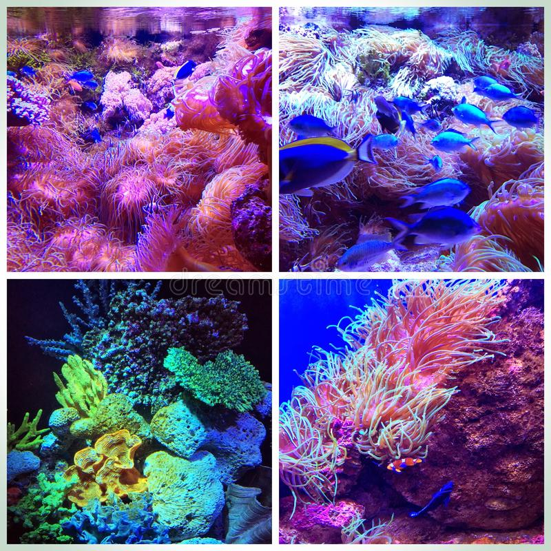 五颜六色的珊瑚礁拼贴画 免版税库存图片