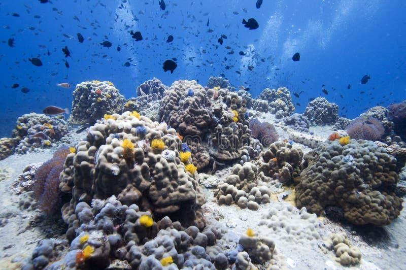 五颜六色的珊瑚 库存图片