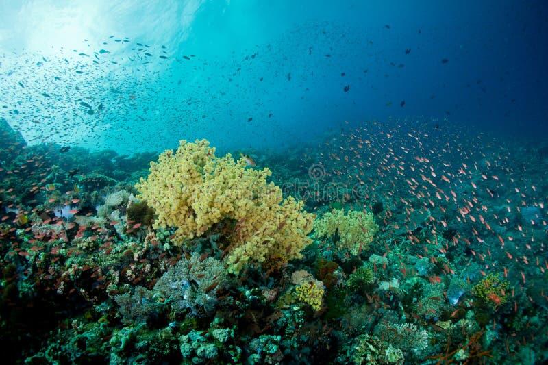 五颜六色的珊瑚 免版税库存照片