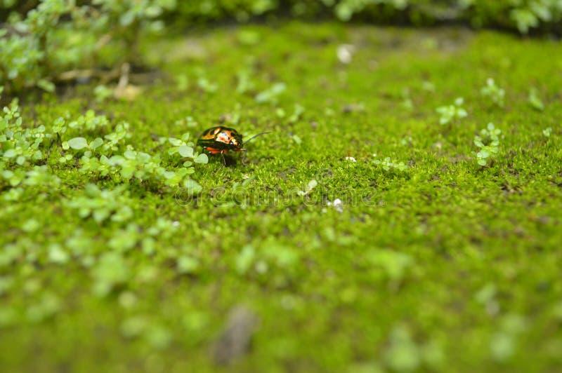 五颜六色的瓢虫 免版税库存照片