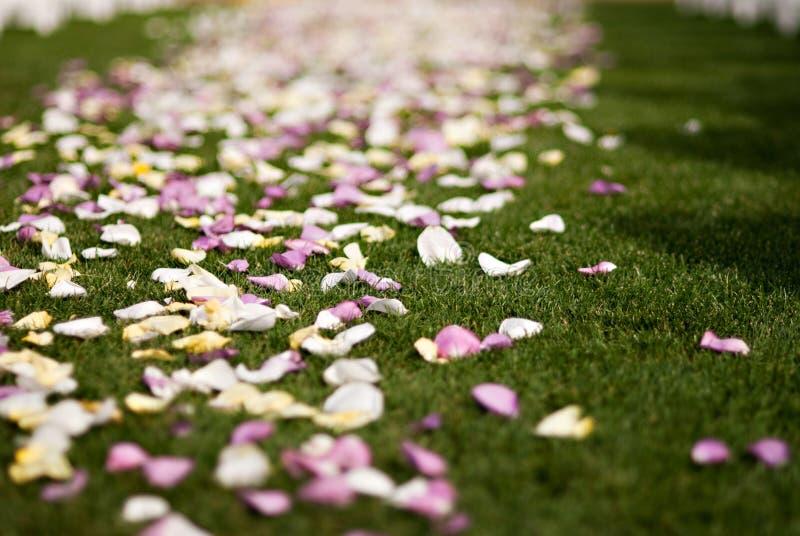 五颜六色的瓣玫瑰色婚礼 图库摄影