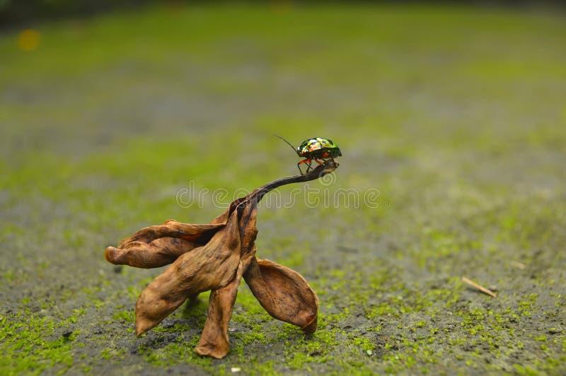 五颜六色的甲虫 图库摄影