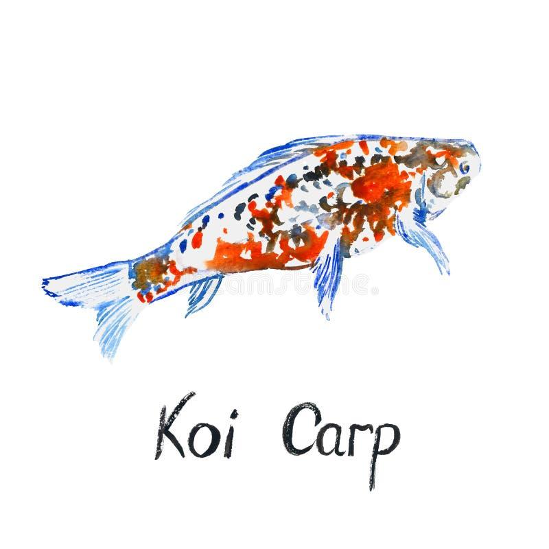 五颜六色的白色和红色Koi鲤鱼,隔绝在白色手画水彩例证 皇族释放例证