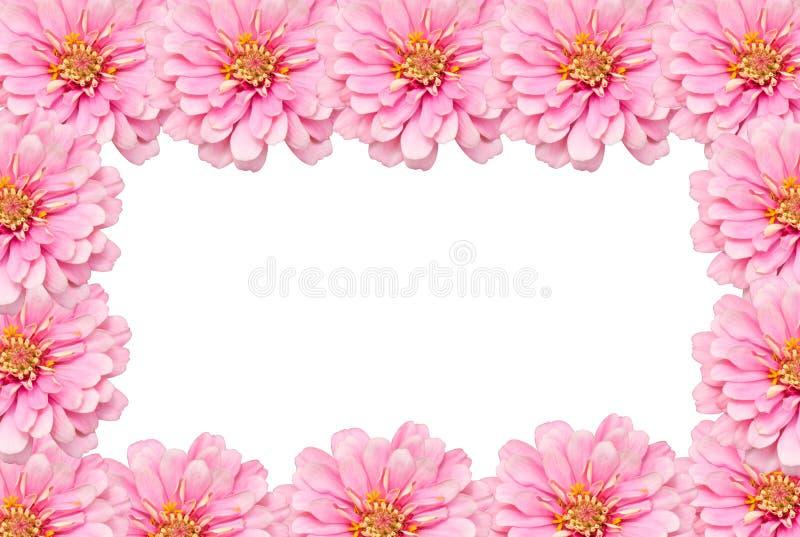 五颜六色的百日菊属花 免版税库存图片