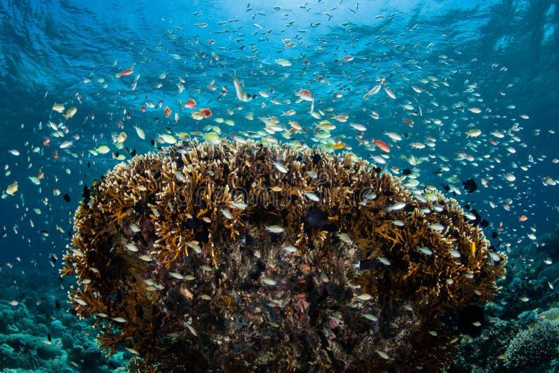 五颜六色的礁石鱼和珊瑚 库存照片