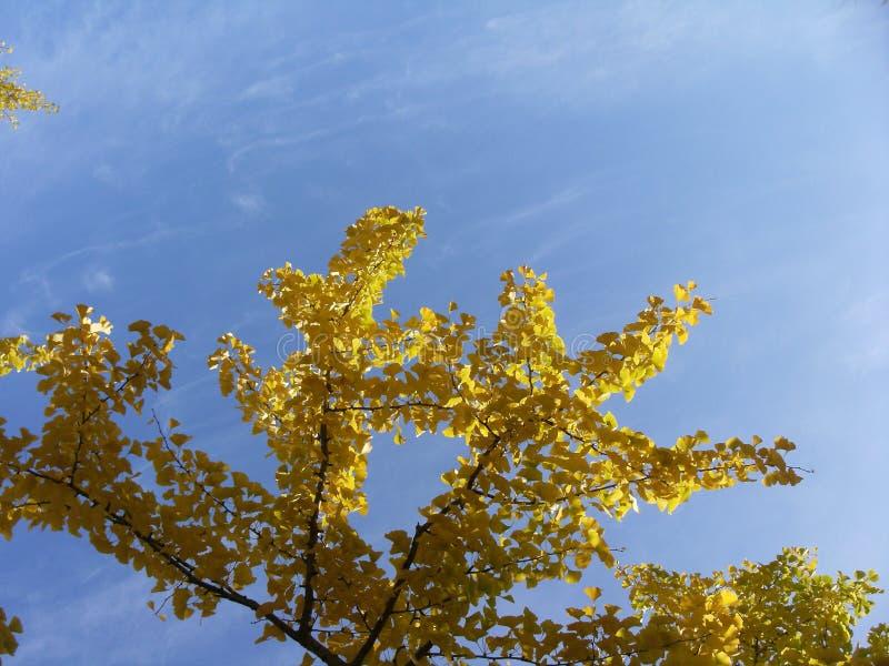 五颜六色的秋叶北海道,日本 免版税库存图片