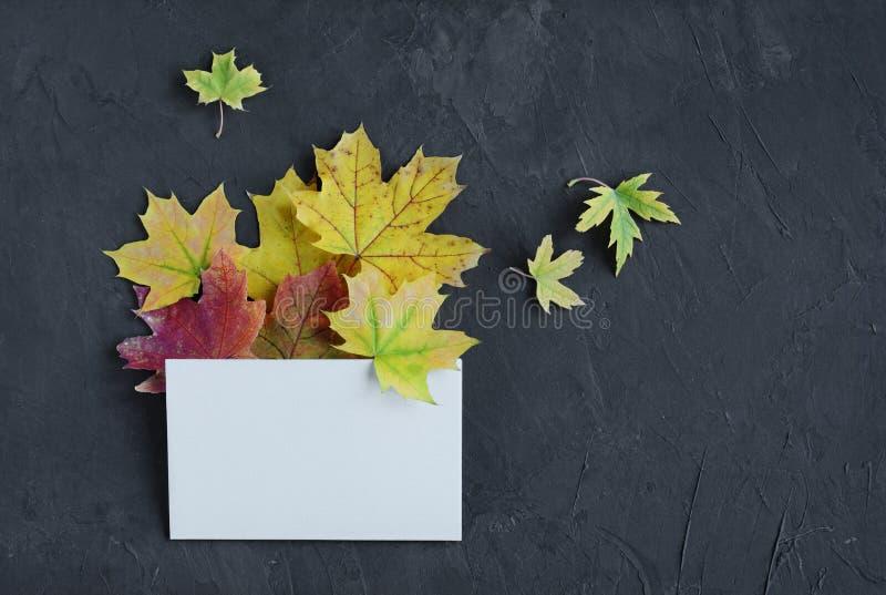 五颜六色的秋叶和白色空插件 库存照片
