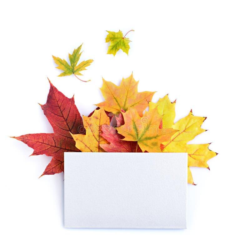 五颜六色的秋叶和白色空插件 免版税库存照片