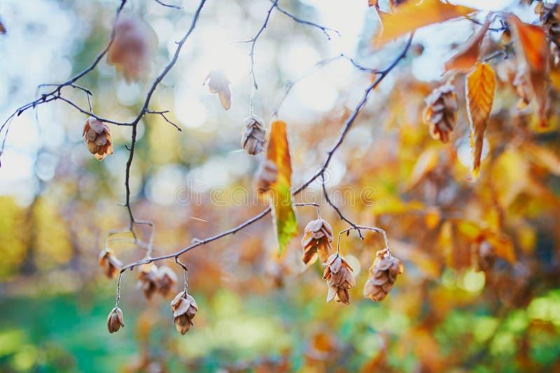 五颜六色的秋叶在一秋天天 免版税库存图片