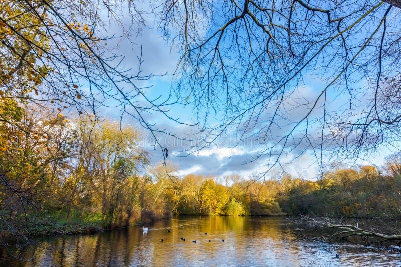 五颜六色的秋天之前包围的惊人的池塘在树离开 免版税库存照片