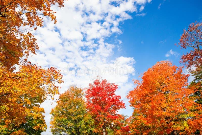 五颜六色的秋天叶子树上面离开反对天空 库存照片