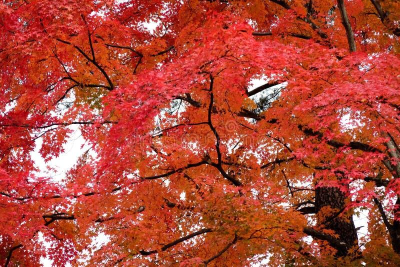 五颜六色的秋天在日本 免版税库存照片