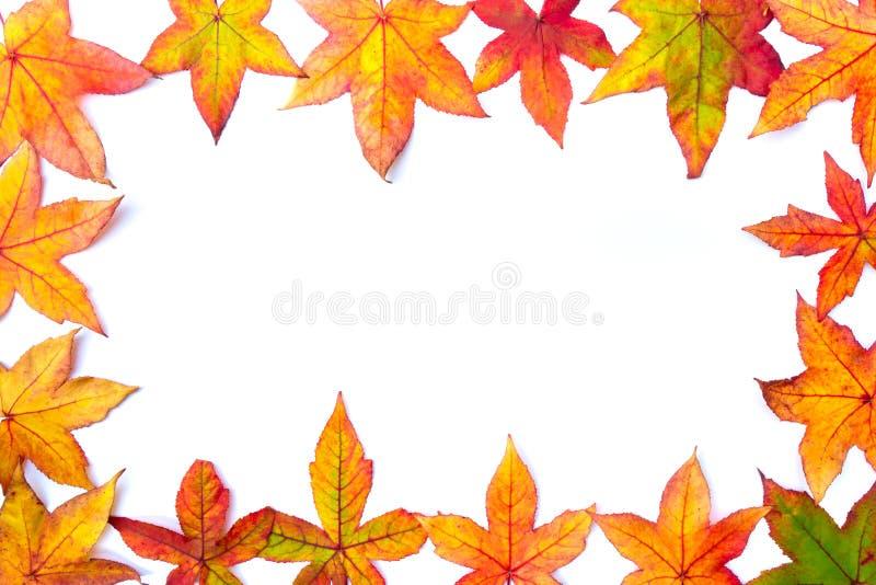 五颜六色的秋天在白色留下框架 库存照片